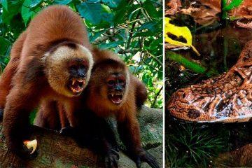 Tambopata Reserve 4D/3N